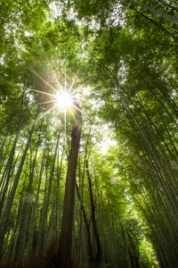 Bosque de Bambú Arashiyama-1
