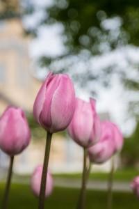 Flores en Tromso